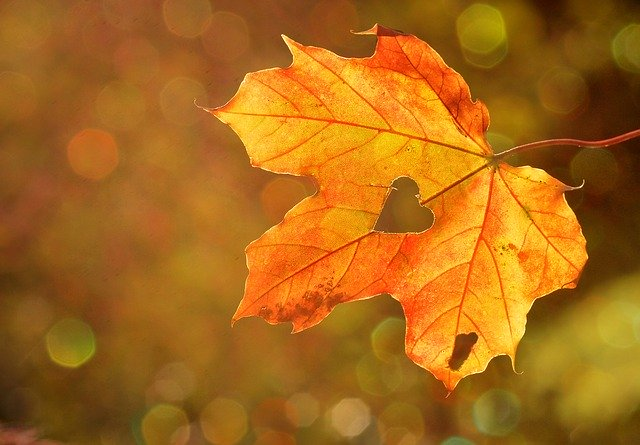 Ősz-üljetek közösen! – Ötletbörze az ősz élményeinek befogadására ovisoknak és szüleiknek